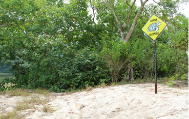 Turtle crossing area, humans please do not trespass!